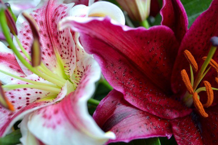 Lilies - Stephanie Astin
