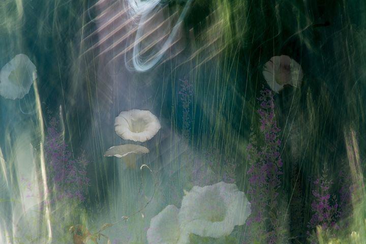 Wild Flower - Mannz Gallery