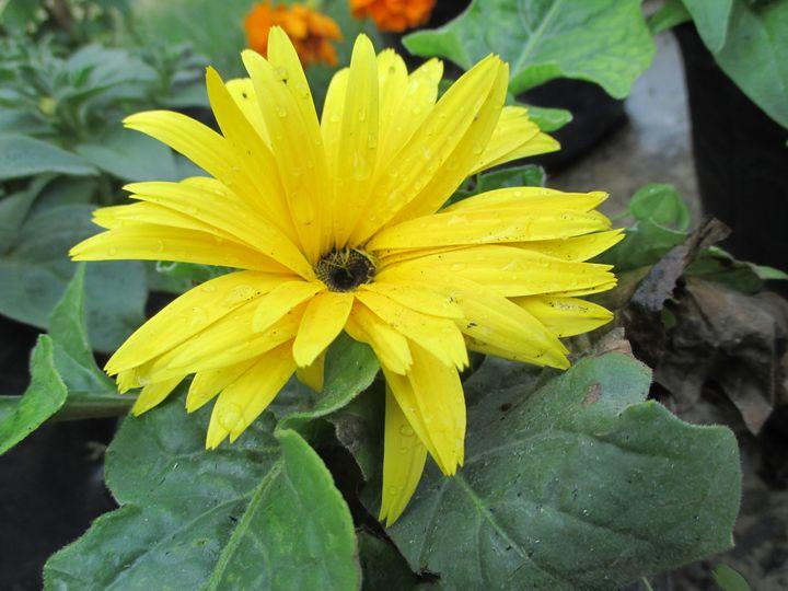 flower - @RG