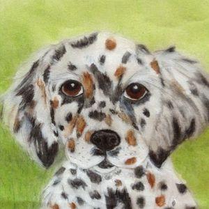 Adorable Austrailian Shpherd Puppy