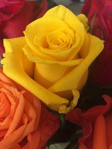 yllow rose