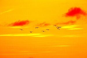birds - melvin manuel A jumadiao