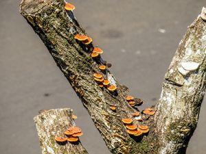 Dead Tree Mushroom Stairs