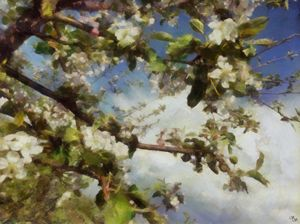 Apple Blossom Sky