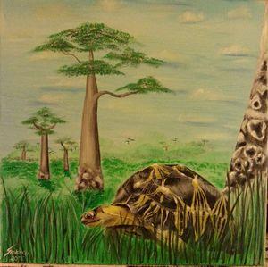 Radited tortoise