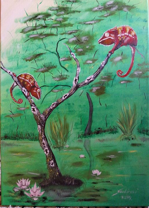 Panther chameleons - Szalanczi