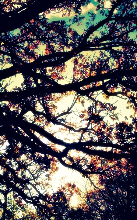 Fall Tree #4 - Amber's Amazing Art