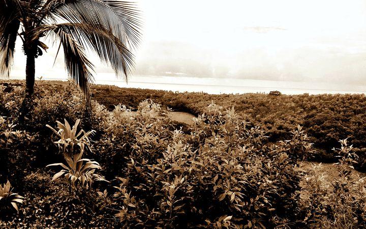 Maui View (Sepia) - Amber's Amazing Art