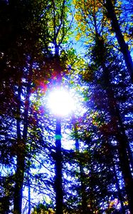 Sun through trees