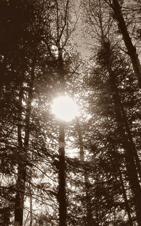 Sun Through Trees (Sepia) - Amber's Amazing Art