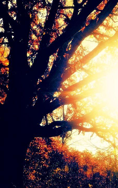 Fall Tree #3 - Amber's Amazing Art