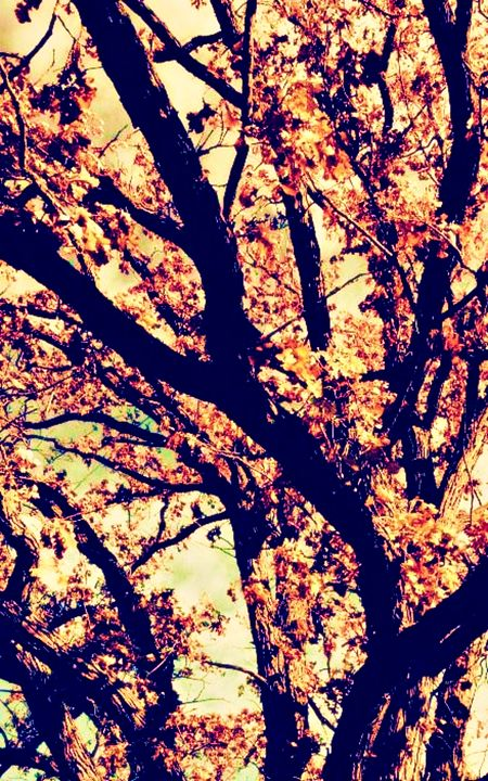 Fall Tree #2 - Amber's Amazing Art