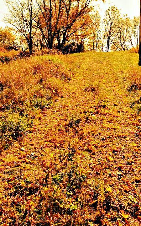 Fall Trail - Amber's Amazing Art