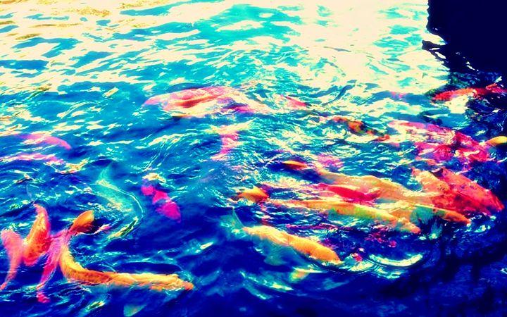 Koi Pond - Amber's Amazing Art