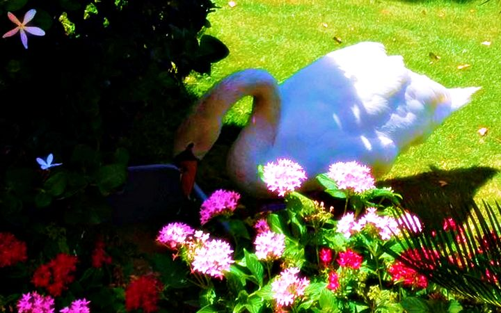Swan and Flowers - Amber's Amazing Art