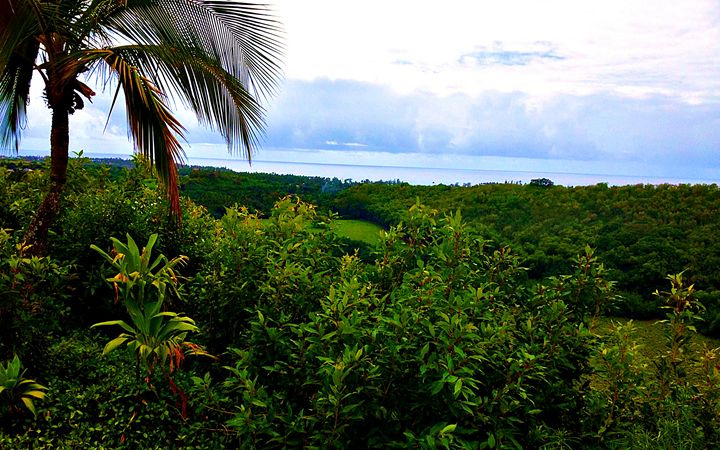 Maui View - Amber's Amazing Art