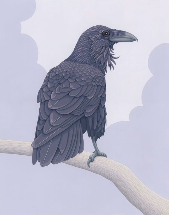 Common Raven - Great Gray Art