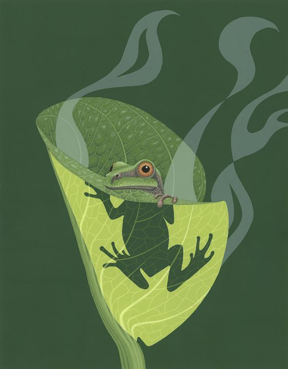 Pacific Tree Frog - Great Gray Art