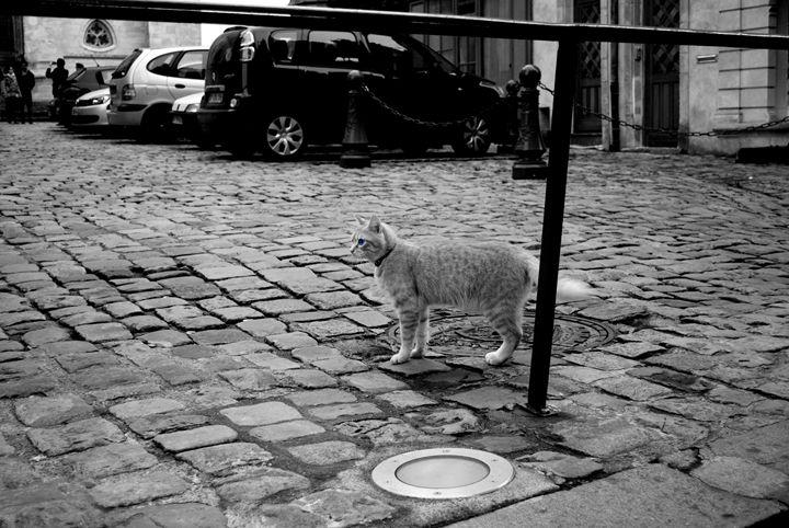 Le Chat Gris - Jacob Lesitsky