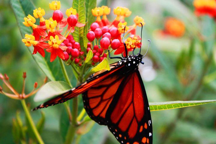Butterfly - Mike flynn