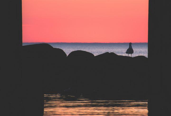 Seagull dreams in orange sky - HideMyWall
