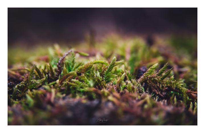 Moss dreams - HideMyWall