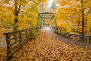 Bridge with fall colors