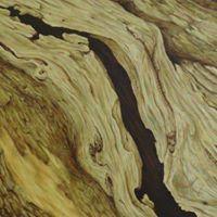 Olive wood - vida en color