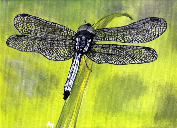 Dragonfly on Grass - OV ARTist