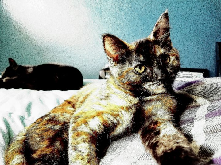 Cat Gaze - Chumbo