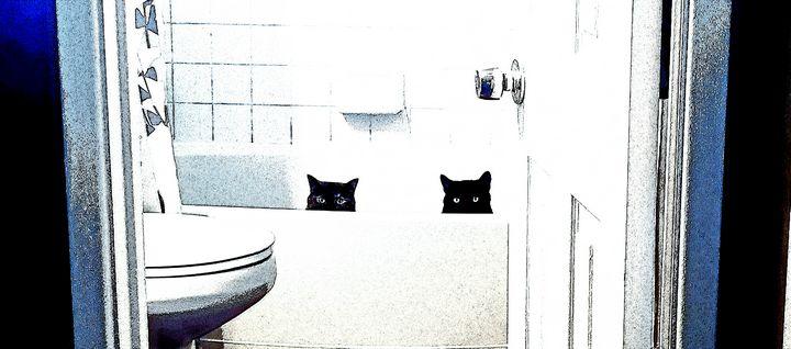 Bathtub cats - Chumbo