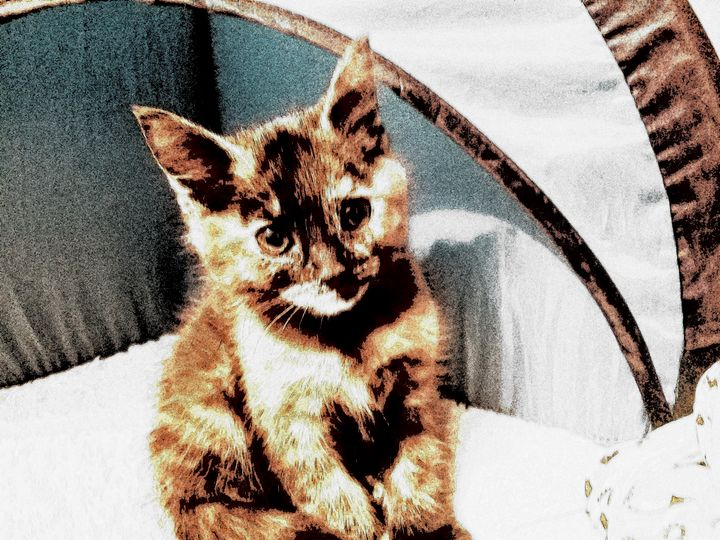 Shy kitten - Chumbo