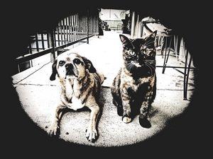 Rainy day - Cat and dog