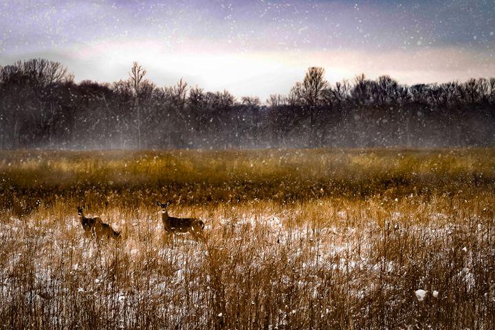 Feeding in the Snow - Kenneth D. Huskey