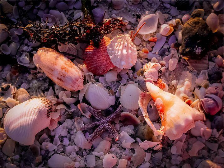 Stars n Shells - Kenneth D. Huskey