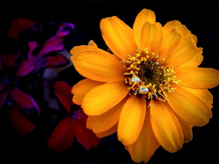Floral Number 34 - Kenneth D. Huskey