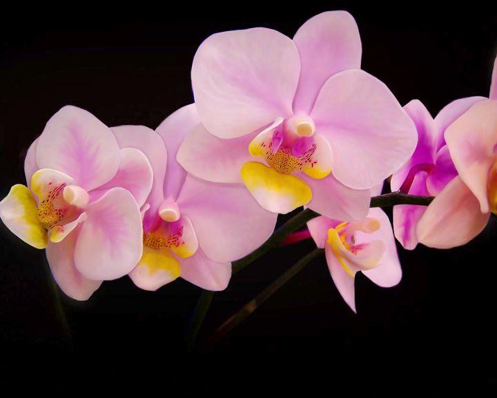 Floral Number 5 - Kenneth D. Huskey