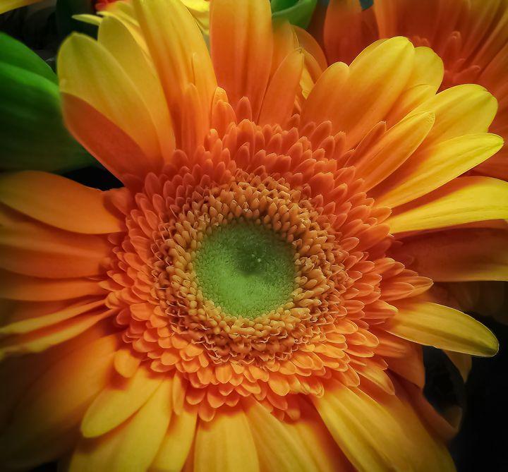 Floral Number Four - Kenneth D. Huskey