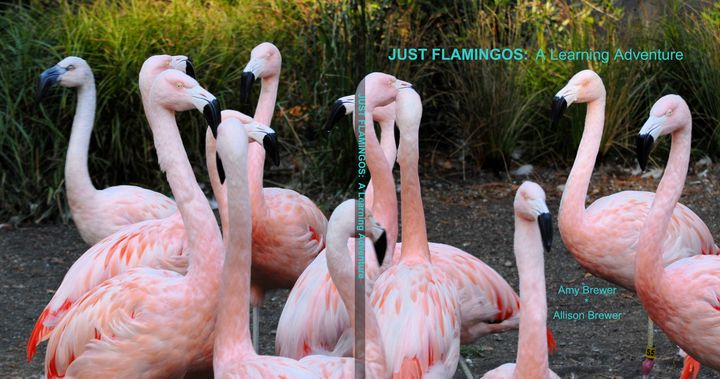 Just Flamingos: A Learning Adventure - A Learning Adventure Books