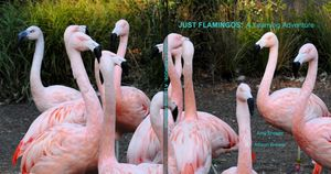 Just Flamingos: A Learning Adventure