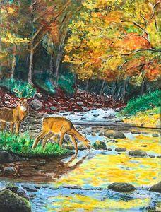 Thirsty Deer