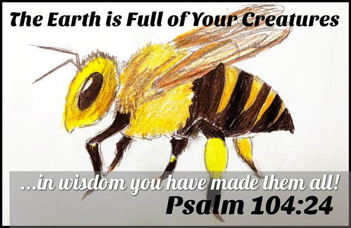 The Wonders of God's Creation - The Humble Ant