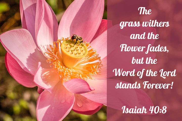 The Word of the Lord Stands Forever! - The Humble Ant