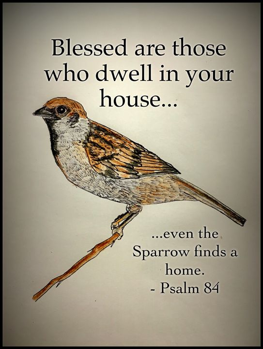 Even the Sparrow - The Humble Ant