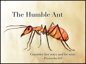 The Humble Ant