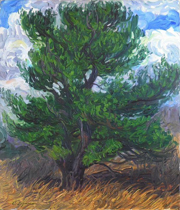 Fir Tree - Charles Leopardo