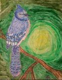 Blue jay oil pastel 8 x 10