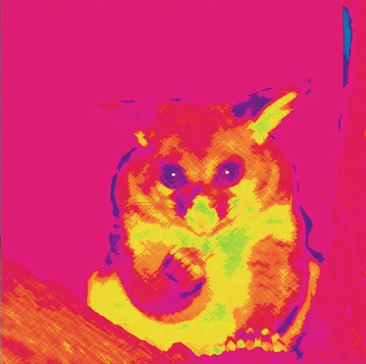 Possum - Linda Marsden