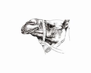 Camel - MoodswingsPrints