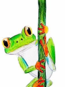 Tree Frog Sketch